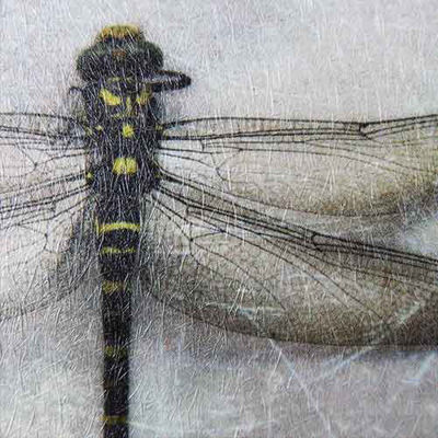 Slika za Papergraphics Digimura-1.1